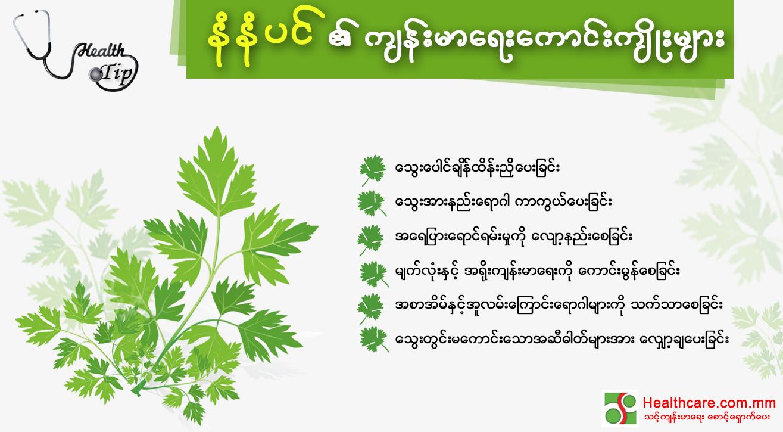 Plant_HT.jpg